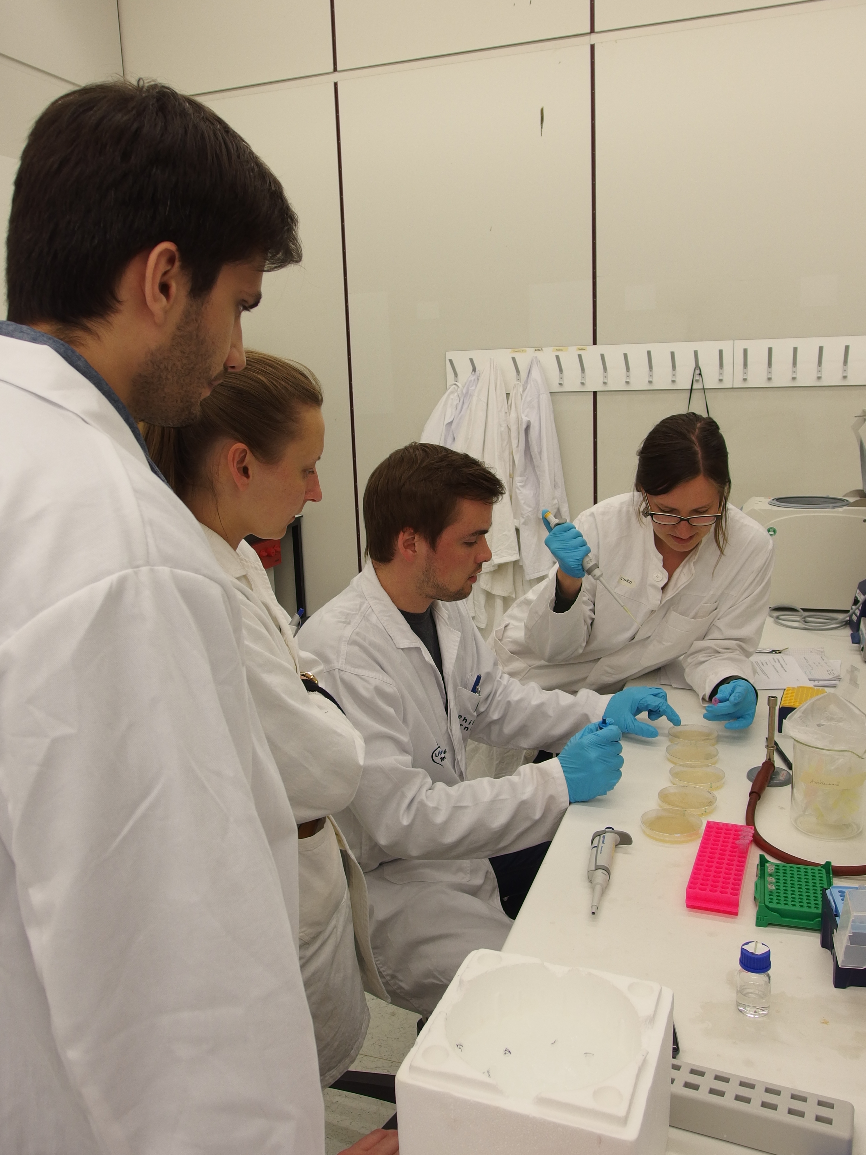 Group of students working in a laboratory with agar plates