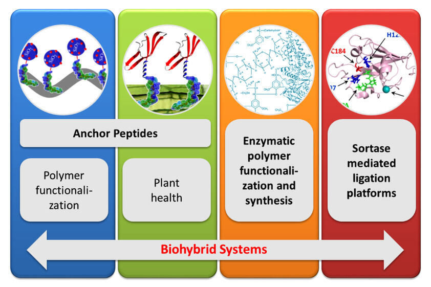 Scheme of the methodology fields of the Biohybrid Systems division