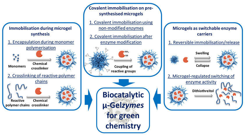 Overview of µ-Gelzymes categorised according to the methodologies for enzyme immobilisation