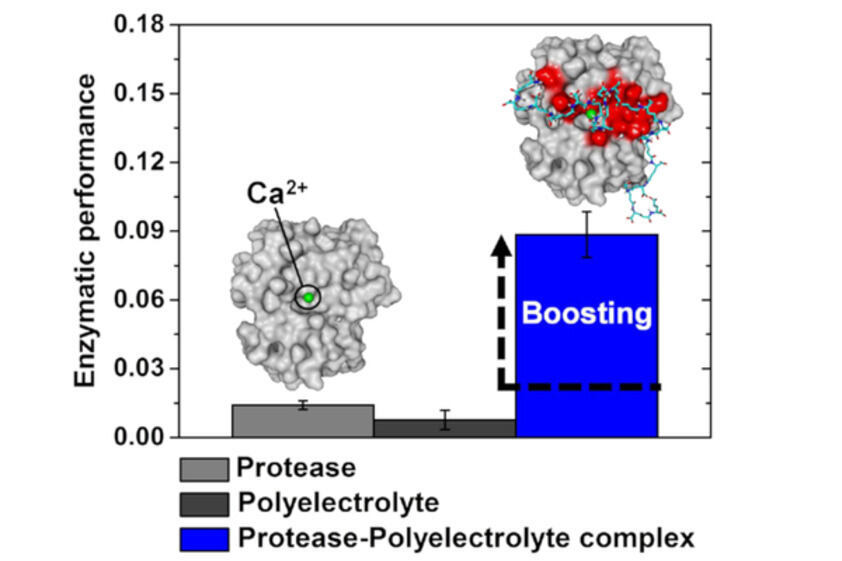 Schematic of the boosting effect of polyelectrolytes on proteases